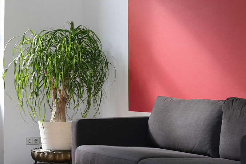 Grey couch against a red wall with a houseplant next to it